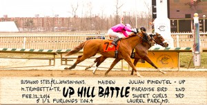 Up Hill Battle captures a 5 1/2 furlong maiden claiming sprint at Laurel February 12, 2016