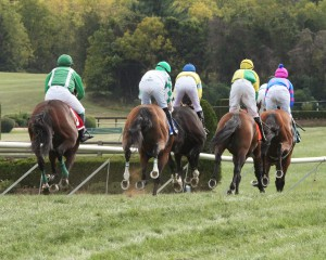 Horses cross the finish at Great Meadow. The 2016 Virginia Gold Cup is slated for May 7th.