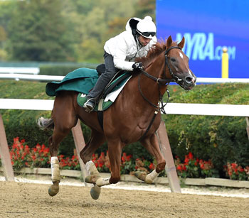 Homespun Hero is shown working out last fall. Courtesy of Barclay Tagg website. Michael Maker now trains the 3 year old son of Hard Spun.