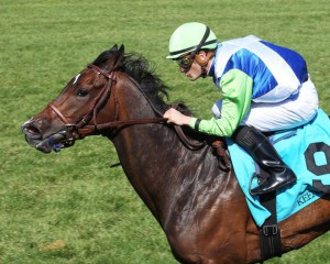 Exaggerated captured the $100,000 Giant's Causeway Stakes at Keeneland on Saturday. Photo courtesy of Coady Photography.