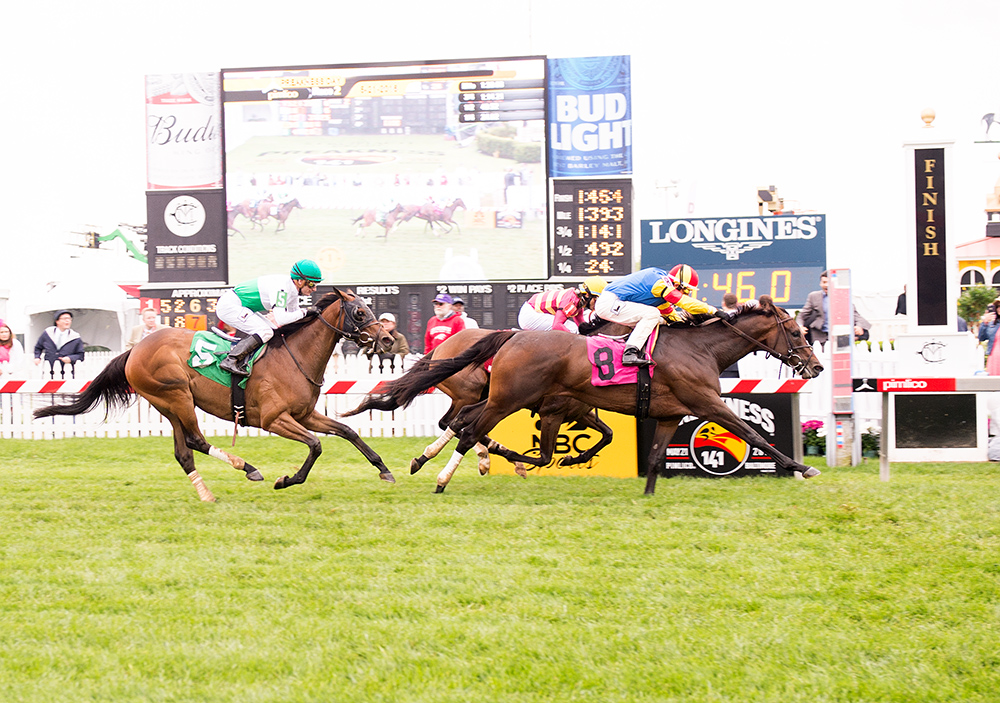 Queen Caroline won the 2nd race at Pimlico on Preakness Day. Bred by the Morgan's Ford Farm, the 3 year old filly was ridden by John Velazquez. Photo by Jim McCue.