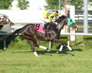Titan Alexander, bred by Mrs. C. Oliver Iselin, won at Mountaineer Park on Memorial Day (Coady Photography)