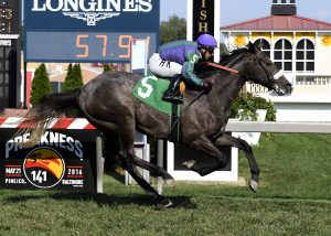 Early Grey won a $30,000 maiden race for colts June 25th at Pimlico. Photo by Jim McCue.