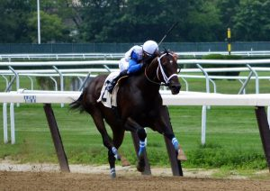 Sticksstatelydude wins a $77,000 allowance race July 15 at Belmont. Photo by Pack Pride Racing.