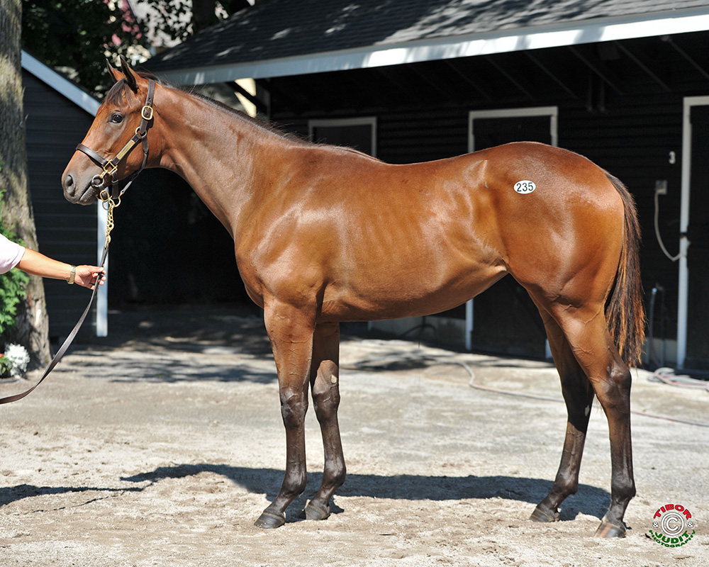 2015 filly by Congrats out of Chemise