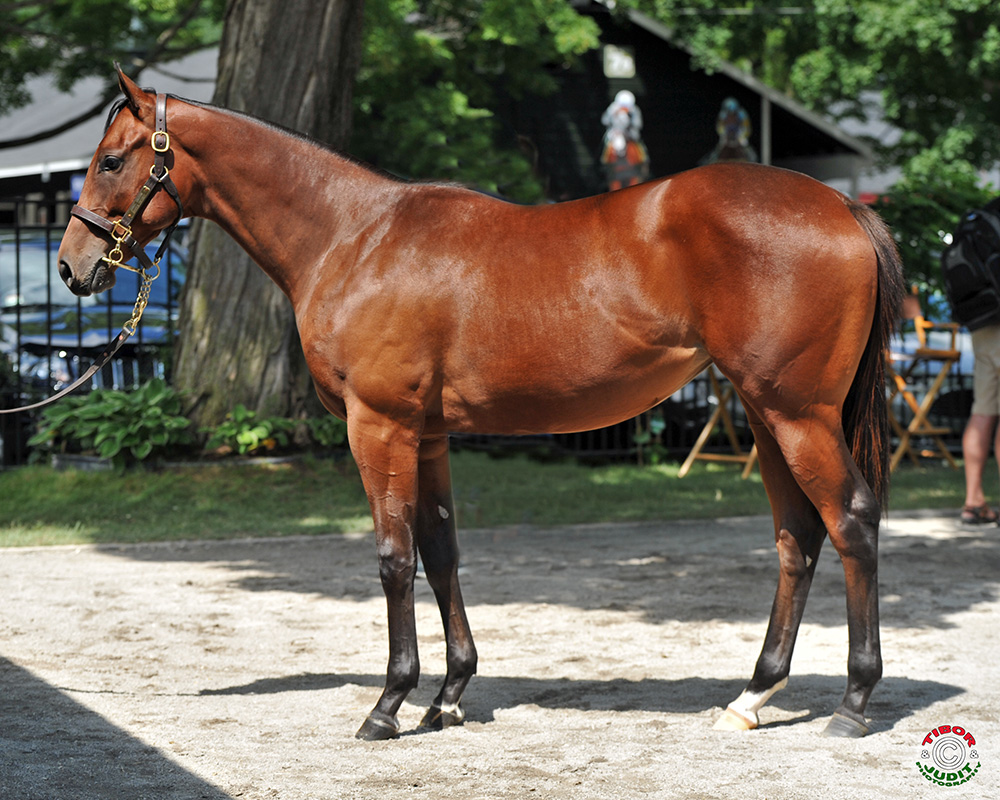 2015 filly by Animal Kingdom out of Garden District