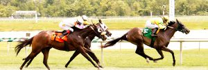 Jockey Horacio Karamanos led Perfect Trace to victory at Laurel August 6th. Photo by Jim McCue.