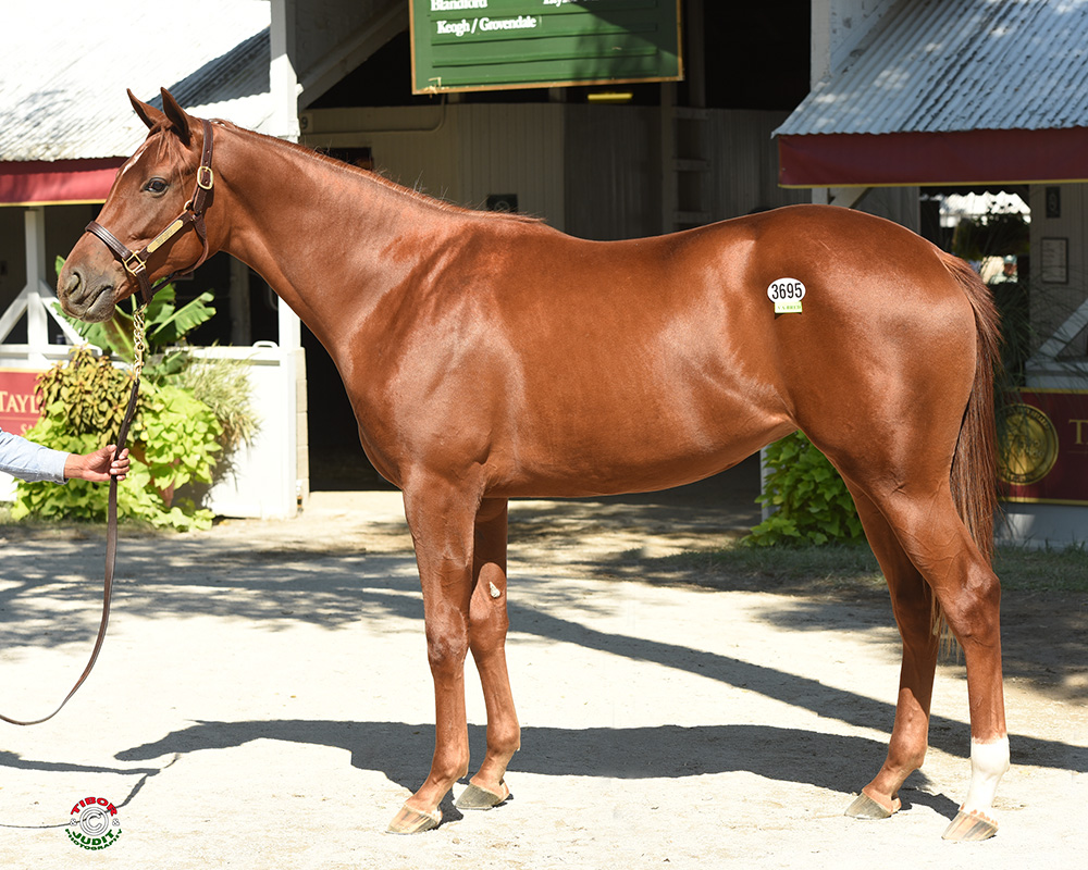Hip #3695, a Mizzen Mast out of Gone Surfin' Bred by the William M. Backer revocable Trust