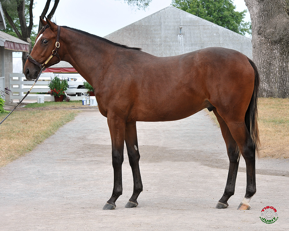 Hip # 1864: a Graydar colt out of Souper Miss bred by Jim & Katie FitzGerald