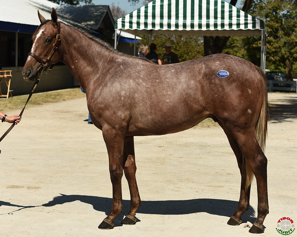 Hip # 3861, a colt by Exchange Rate  out of Runninglikeandangel