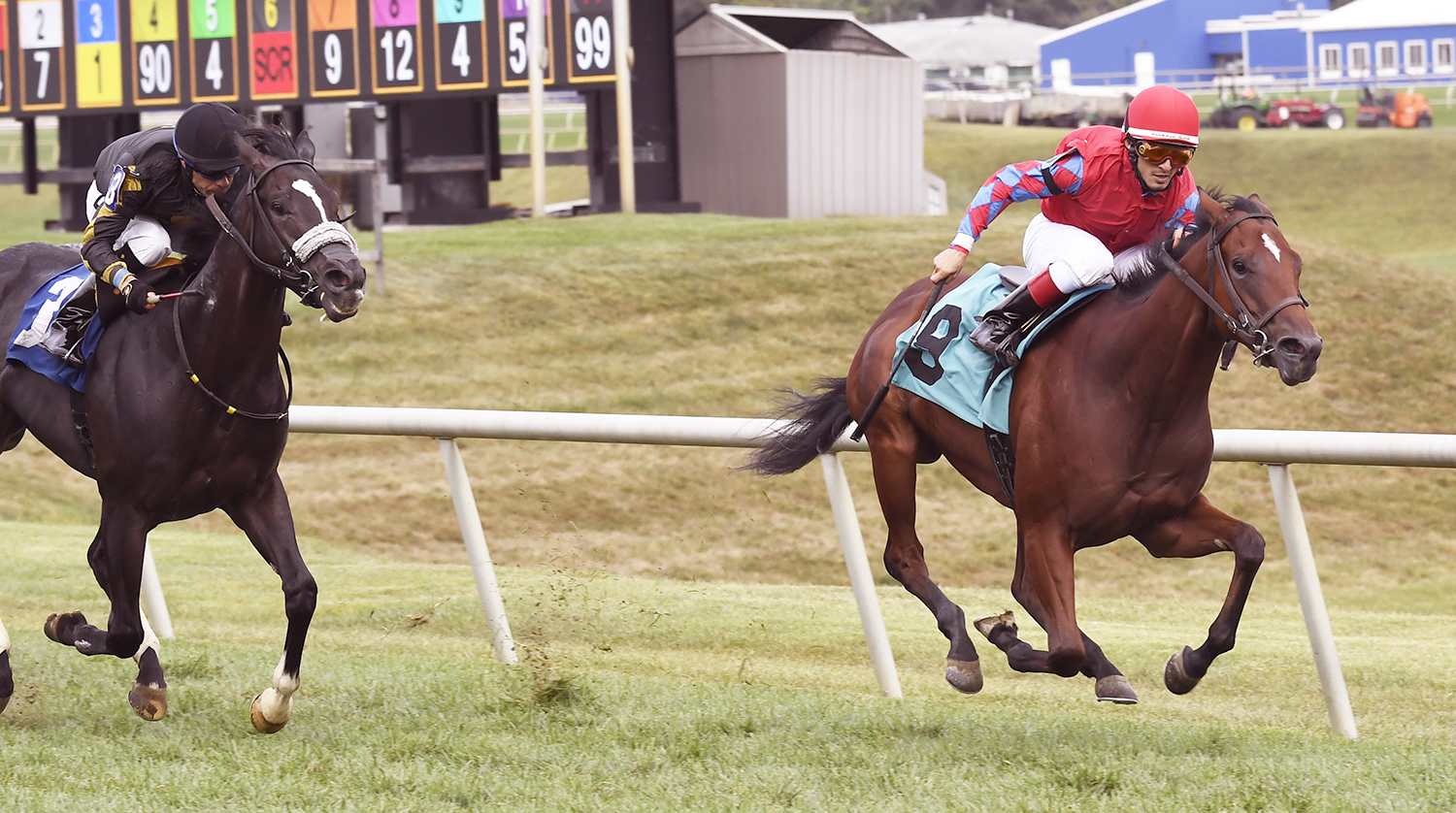 Lime House Louie, bred  by Carlos Moore & Gillian Gordon-Moore, won the Jamestrown Stakes for 2 year olds at Laurel Saturday. Gabriel Saez guided the effort up top. Photo by Jim McCue.