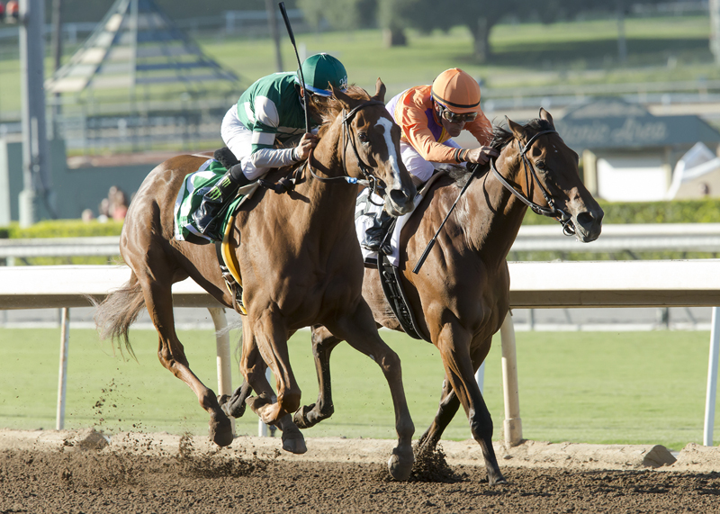 Hronis Racing's Stellar Wind and jockey Victor Espinoza, left, outleg Beholder (GaryStevens), right, to win the Grade I, $300,000 Zenyatta Stakes, Saturday, October 1, 2016 at Santa Anita Park, Arcadia CA. © BENOIT PHOTO