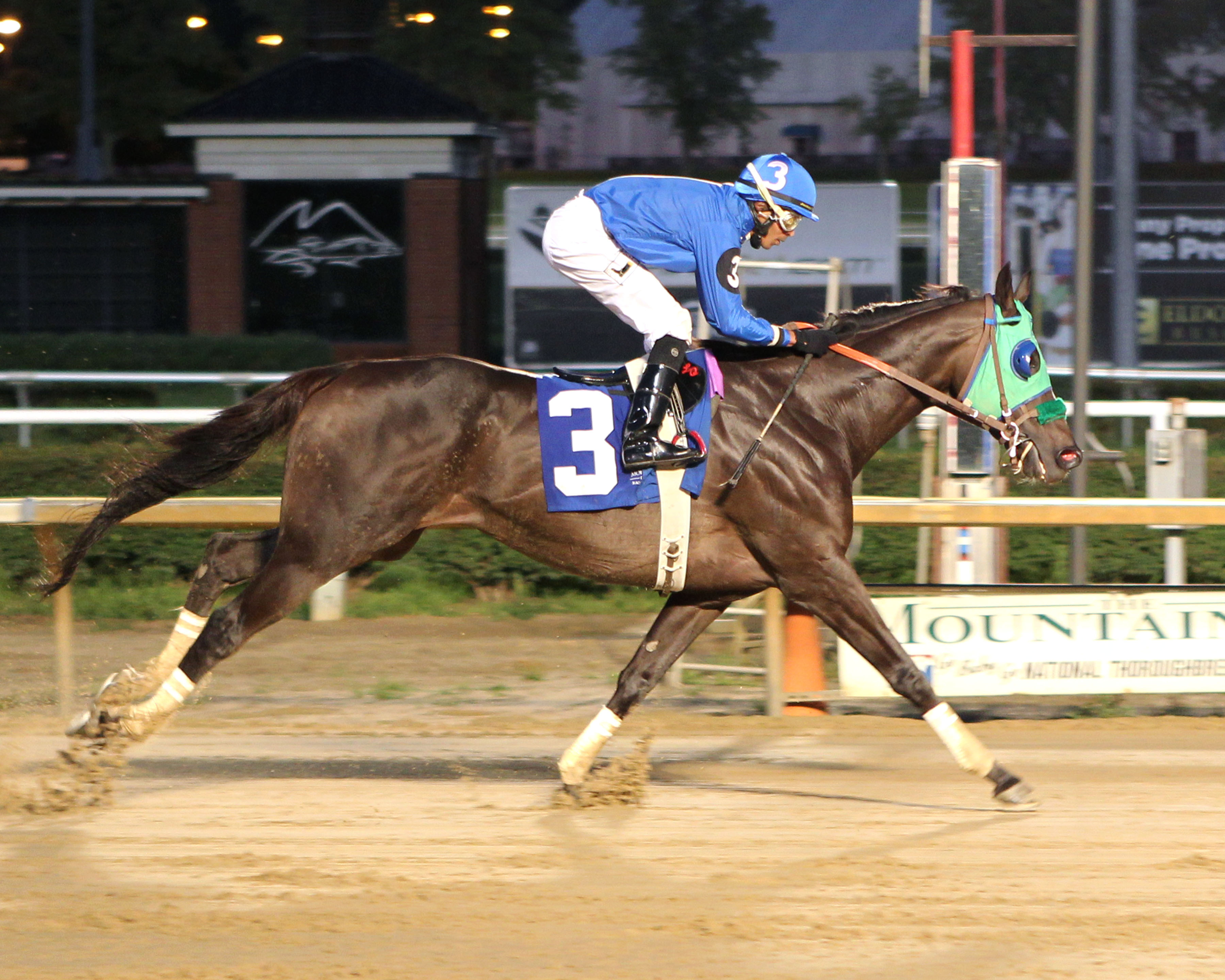 Titan Alexander will compete in Saturday's Maryland Million $150,000 Classic Stakes. Photo by Coady Photography