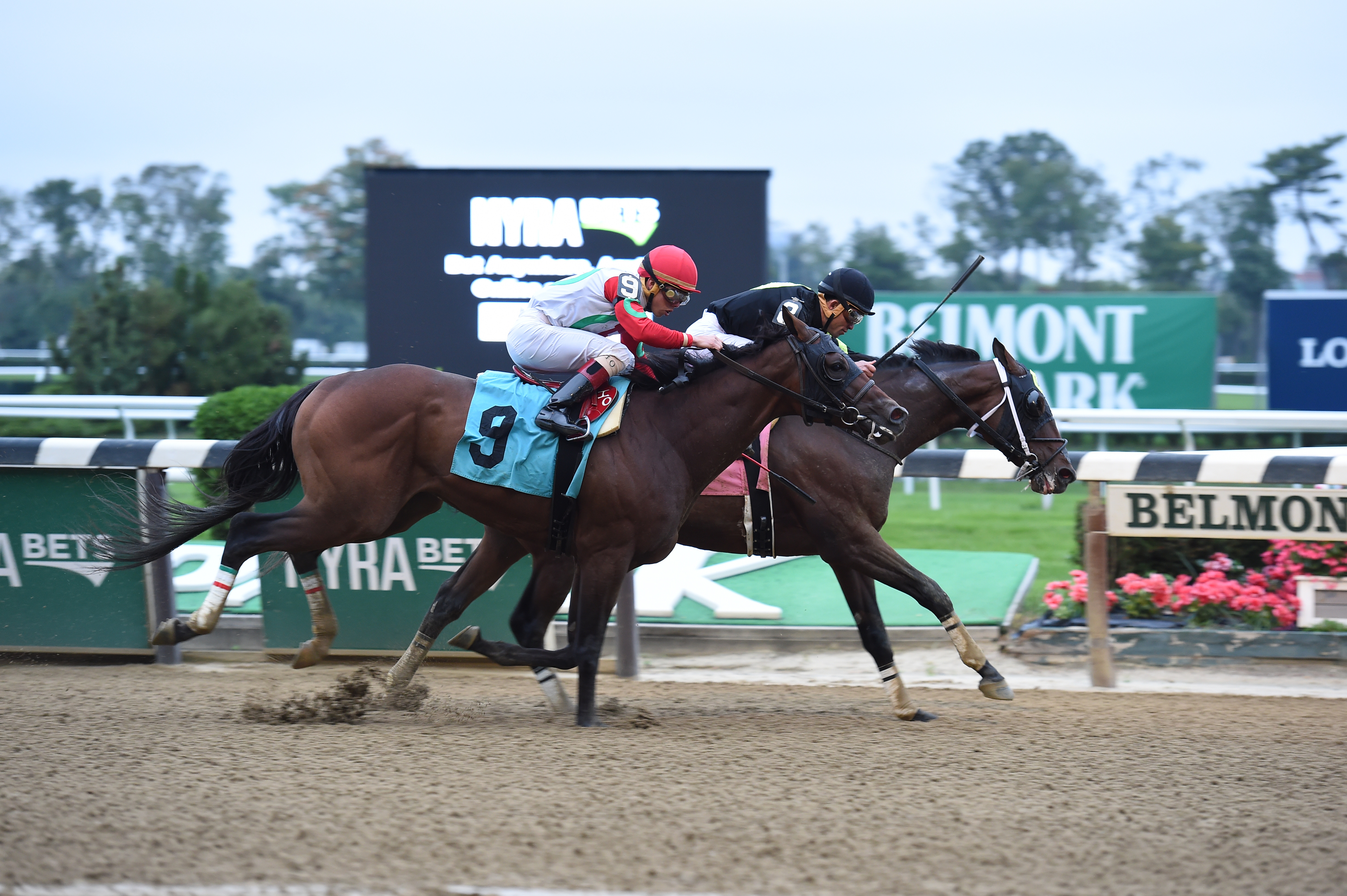 River Date, bred by Henry Carroll, went inside to score a win by a head over Do Share at Belmont October 2nd. Courtesy of Coglianese Photo.