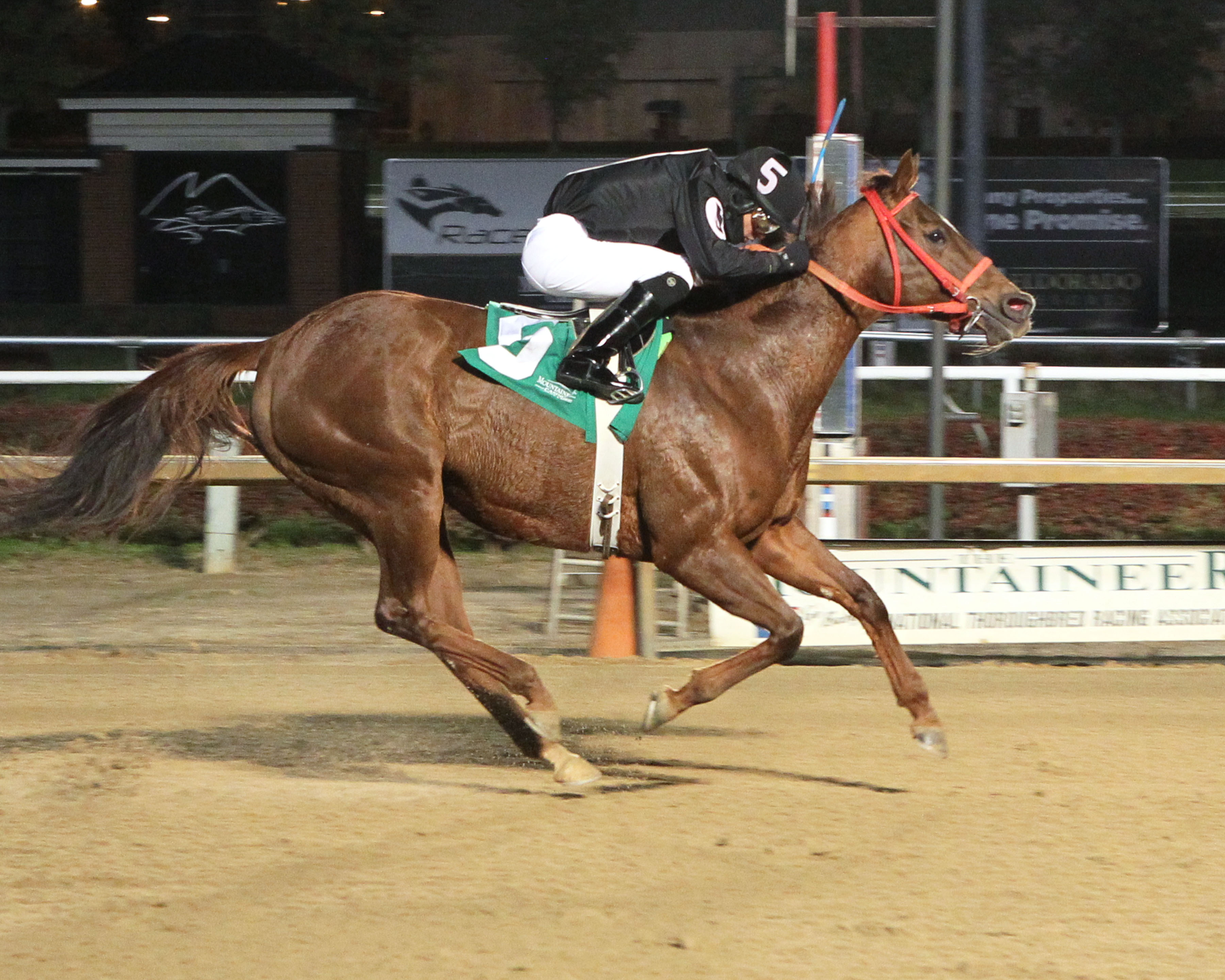 Fur Lined's win at Mountaineer November 13th got owner Amailia Cox a 25% bonus courtesy of the VTA/HBPA Mid-Atlantic incentive program. Photo by Coady Photography.