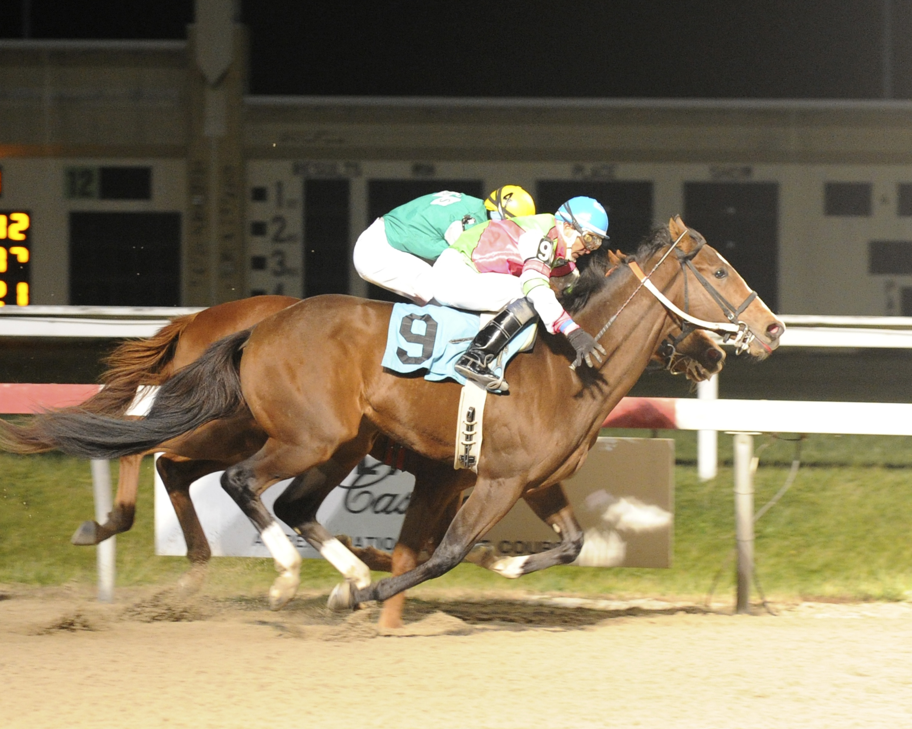 Peace of Green Rvf wins by a neck over Majestic Calling. Photo by B & D Photography.