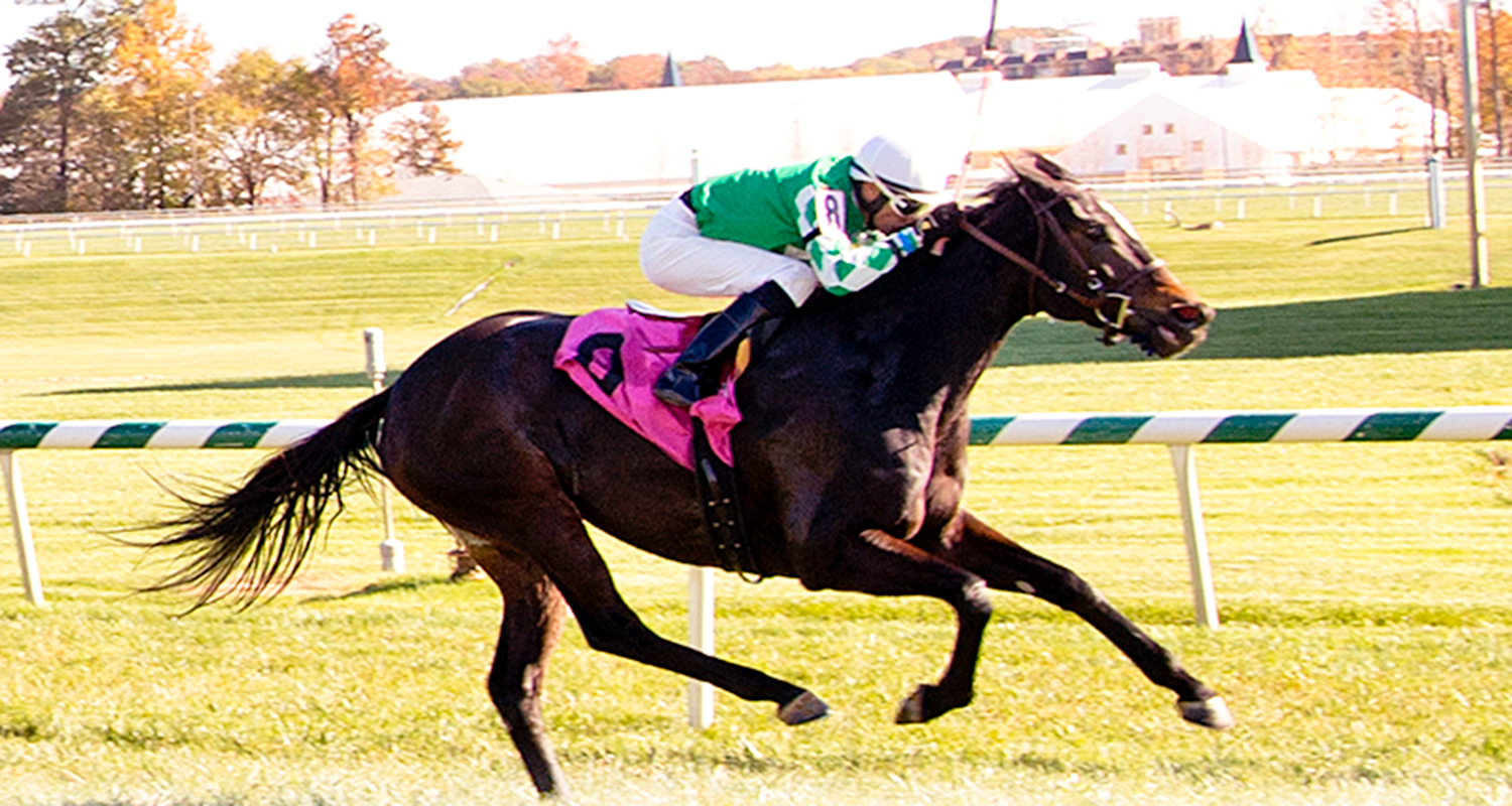 Northern Eclipse got her first lifetime win at Laurel in a maiden claimer November 4th. photo by Jim McCue.