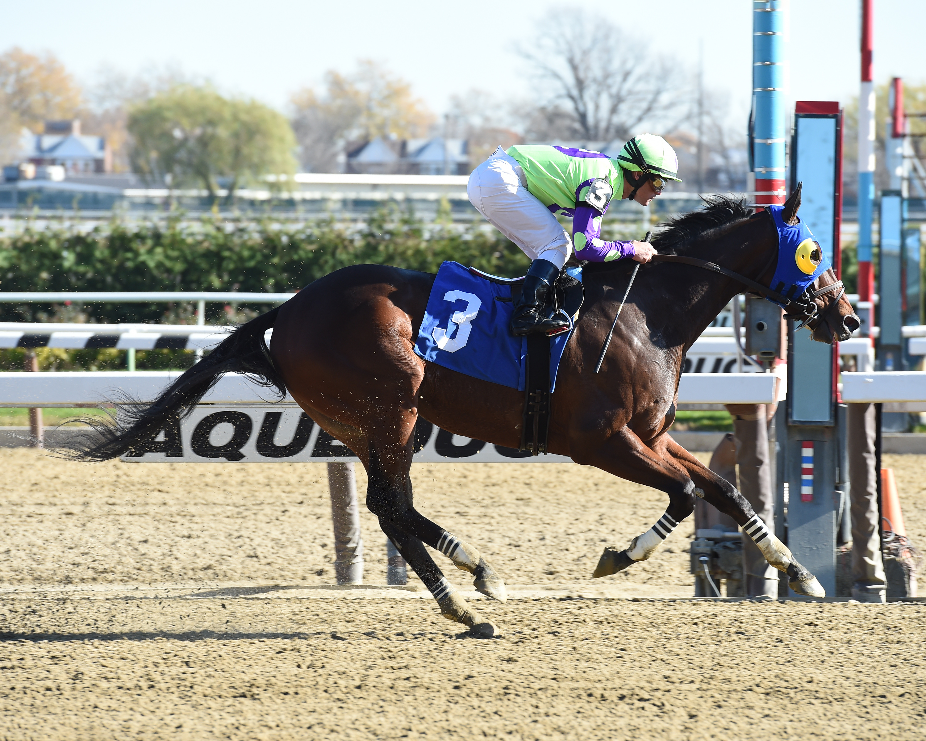 Jockey Javier Castellano directed River Date to victory at Aqueduct November 18th. Photo by Adam Coglianese.