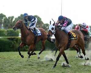 Virginia-bred Rose Brier won the Tropical Turf Handicap (Gr. 3) Thanksgiving weekend but was disqualified and placed 2nd.