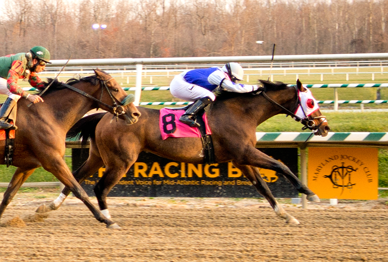 Hatteras Bound is shown winning a $30,000 claimer at Laurel December 3rd. Photo by Jim McCue.