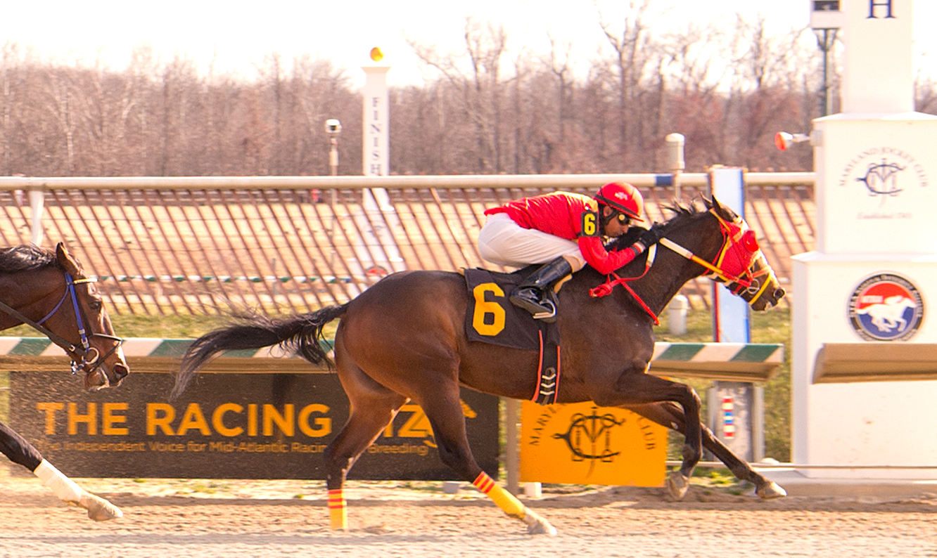 "Greek God collected his 19th ""in the money"" finish with a victory Jan. 28 at Laurel. Photo courtesy of Jim McCue."