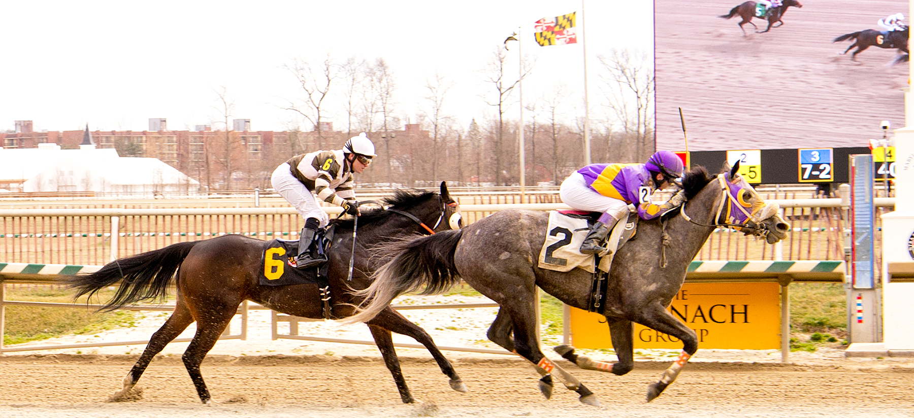 Street Miz, bred by Larry Johnson, won her second career race Feb. 25 at Laurel. Photo by Jim McCue.