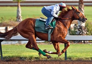 Dortmund, owned by Virginian Kaleem Shah, will compete on turf for new trainer Art Sherman. Photo by Gary Tasich