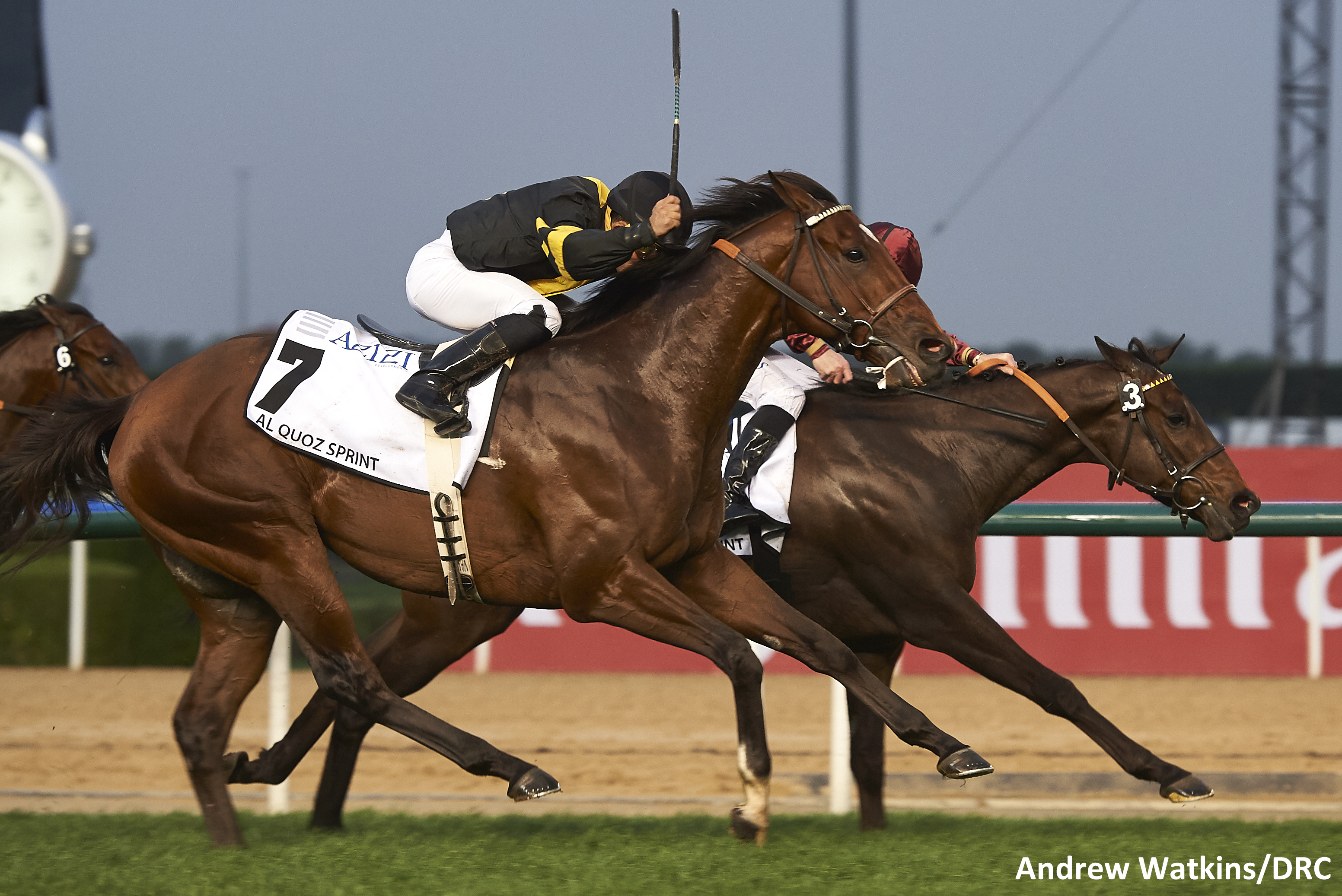 Long On Value was a close second in the $1 Million Al Quoz Sprint March 25th in Dubai. Photo by Andrew Watkins.